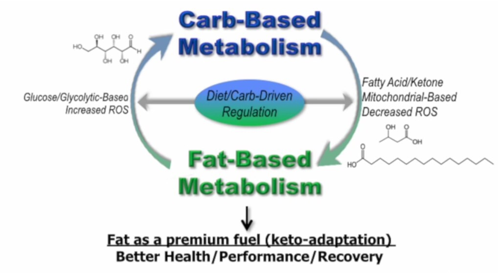 Diet Karbo Turunkan Metabolisme Tubuh, Benarkah