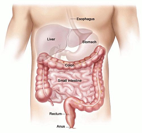 colon-intestines-free-clipart-cksinfo-com