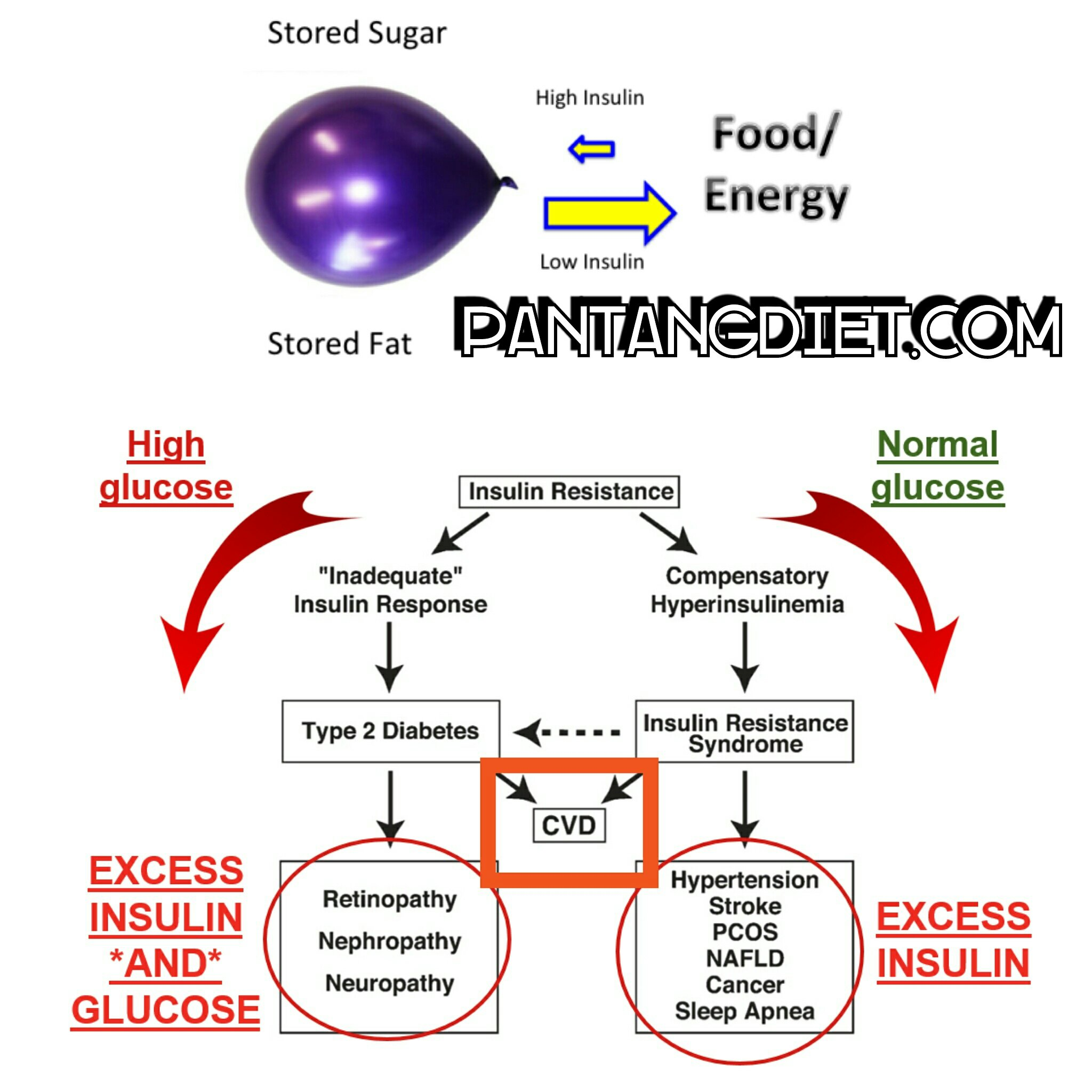 Metode Food Combining, Rahasia Frisca Sukses Turunkan Berat Badan 14 Kg